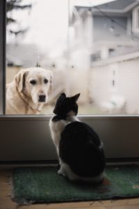 "dog and cat talking ""Its not our fault"""